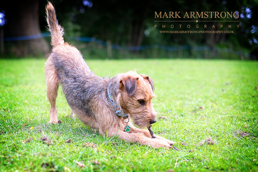 West Midlands Pet Photography-Amber & Bruce