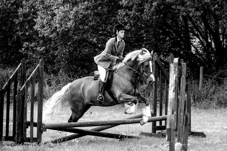 Horse Photography Stourbridge - Portrait photographer
